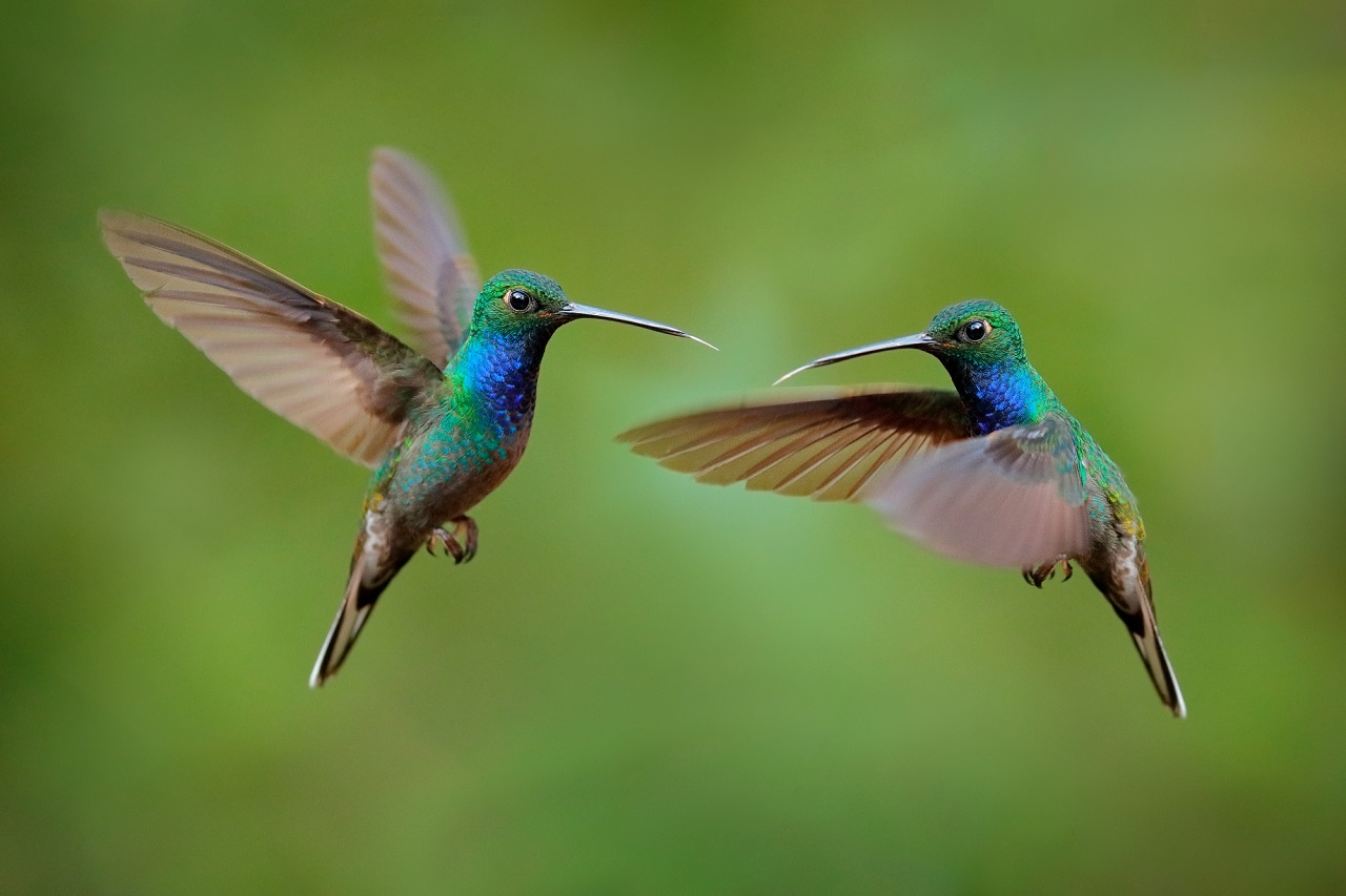 why are hummingbirds so mean to each other
