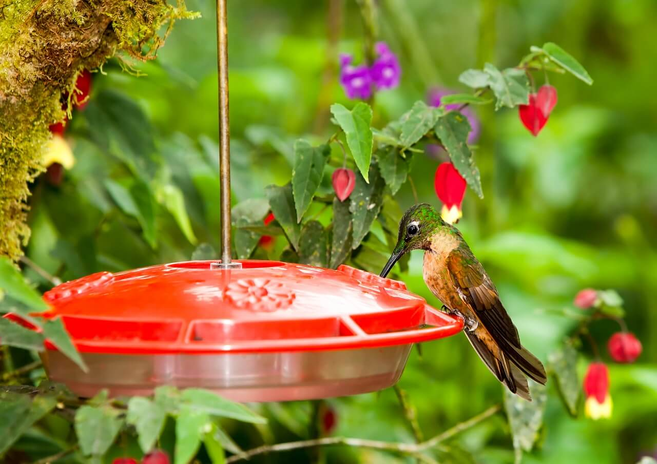 what time of day do hummingbirds come to feeders
