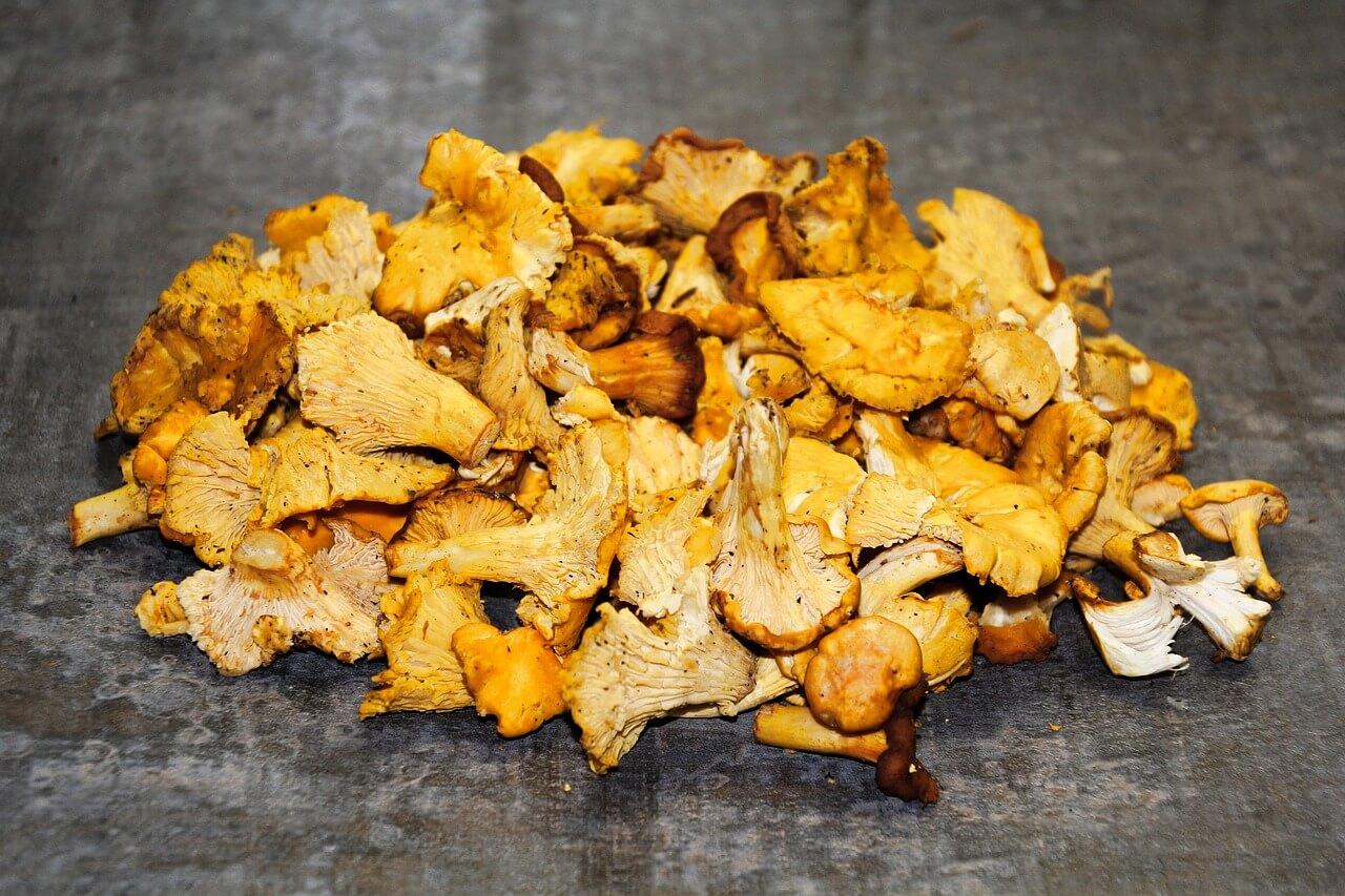 how to store fresh chanterelle mushrooms