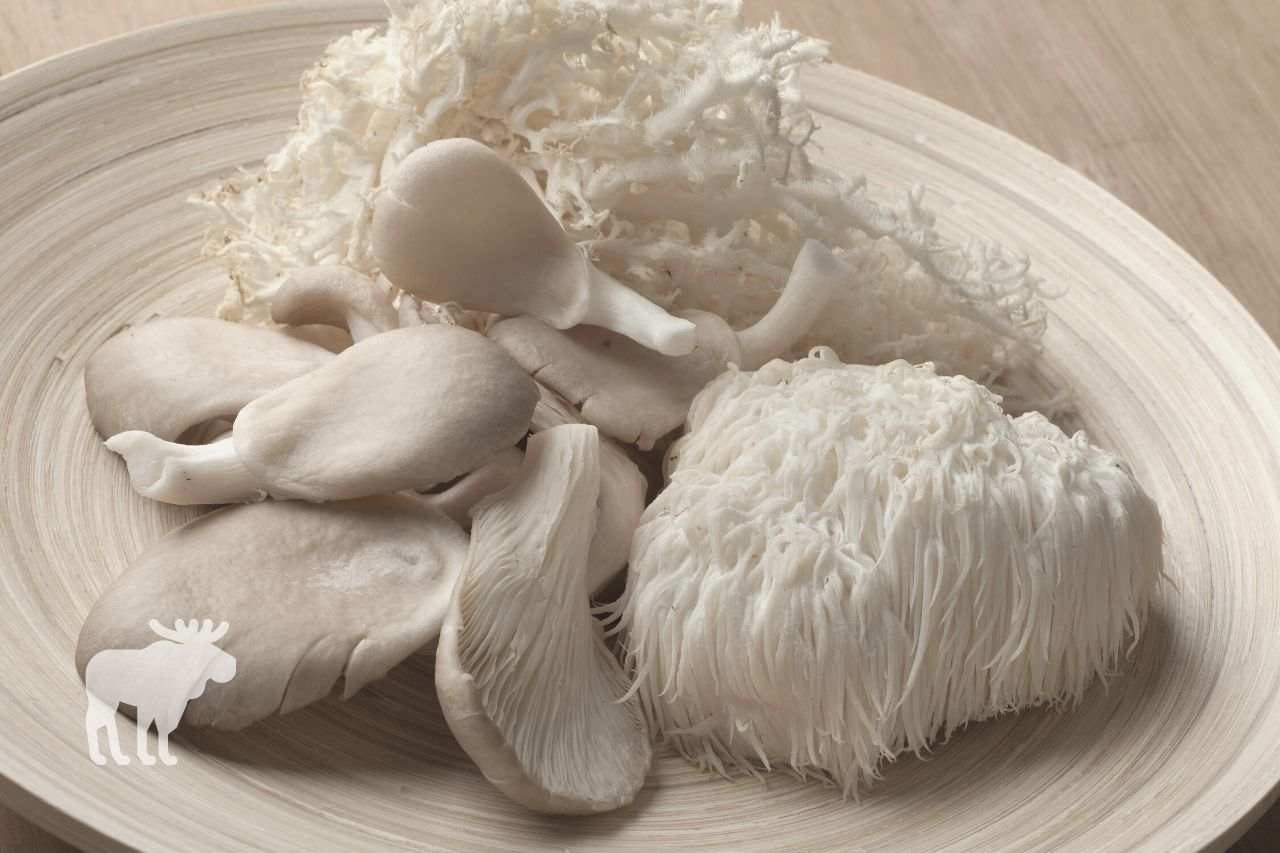 how to cook lion's mane mushrooms